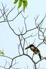 47. Around Palenque, Chiapas, Mexico-3.jpg (gaillard.galopere) Tags: america amérique animaux chiapas couleur gaillardgalopere mex mx mexico mexique palenque travel voyage animal animals animauxsauvages ave bird bright brillant brillante claro color colorful coloré green loverlander lustroso oiseau overland overlanding toucan verde vert viesauvage wild wildlife