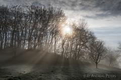 A9900544_s (AndiP66) Tags: winterstimmung nebel fog mist sun sonne sunrays sonnenstrahlen gegenlicht backlight wolfisberg kantonbern cantonofberne hills hügel winter sony sonyalpha 99markii 99ii 99m2 a99ii alpha ilca99m2 slta99ii sigma24105mmf4dghsmart sigma 24105mm f4 amount andreaspeters