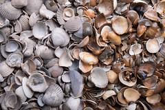 Muscheln dry-wet