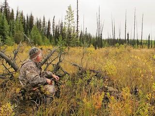 British Columbia Wolf Hunt & Big Game 11