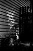 光条 (striation) (Dinasty_Oomae) Tags: ジフィー・コダック jiffykodak 白黒写真 monochrome bw blackandwhite blackwhite 白黒 東京都 東京 tokyo 江東区 kotoku 影 shadow