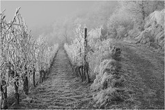 Sony *344 (KKS_51) Tags: sonyalpha7ii elsass winter weinberge