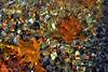 kisses of leaves...love of water... (gregtz) Tags: water underwater river distortion leaves leaf colours emotions nature winter stones ποτάμι νερό ναύπακτοσ nafpaktos παραμόρφωση φύση φύλλο χρώματα χειμώνασ συναισθήματα πορτοκαλί orange πέτρεσ