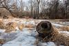Dog Park (jonnyfixedgear) Tags: caledonia dmclx7 dogpark lx7 lumix panasonic racine rootriver winter wisconsin