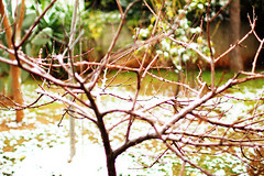 tree alone (Katrinitsa) Tags: snow tree alone iced snowy lemon naked yellow colors winter wintercolors canon canoneosrebelt3i ef35mmf14lusm zoom focus bokeh fruit nature landscape beauty amazing awesome natural january athens greece glyfada dreamy branch ice joy sweet nice