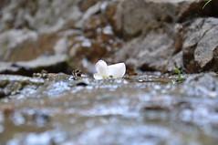 DSC_5445 (Nikolay.Shulga) Tags: franklloydwright fallingwater 20130718fallingwater