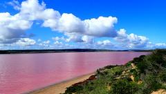 The Amazing PINK LAKE....... (Lani Elliott) Tags: pinklake pink portgregory westernaustralia bacteria hue colour lake