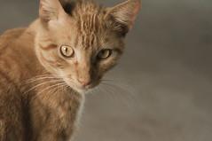 Pichu (Cromática Studios) Tags: mochitlan gato guerrero chilpancingo mexico animales