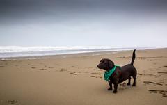 Worster (Annatville) Tags: winter dog canterbury raining spencerpark