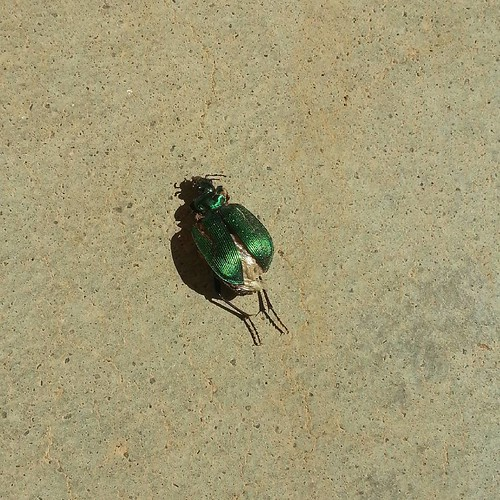 #postflutter #shiny #green #bug