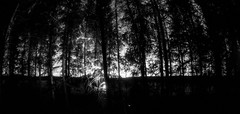 _MG_8820 (Sakuto) Tags: trees light wallpaper nature night clouds forest stars landscape nightsky shape myst lightpollution