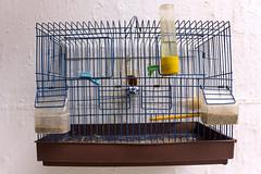 bird lines birds cage