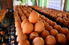 ฟาร์มไก่ไข่ เมืองแปดริ้ว ฟันธงอนาคตวัตถุดิบอาหารสัตว์แพง!