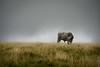 Rencontre au sommet (erwannf) Tags: france weather animal nuages vache météo midipyrénées