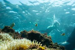 20150905-DSC_2494.jpg (d3_plus) Tags: sea sky fish beach japan 1 scenery underwater diving snorkeling  nikkor shizuoka   vr  apnea izu j4  waterproofcase    skindiving minamiizu f3556       nikon1 hirizo  1030mm  nakagi pdzoom 1  nikon1j4 1nikkorvr1030mmf3556pdzoom beachhirizo misakafishingport  1030mmpd nikonwpn3 wpn3