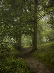 A Path Through the Woods (Damian_Ward) Tags: wood morning trees mist misty fog forest chilterns buckinghamshire foggy bucks beech wendover astonhill thechilterns chilternhills wendoverwoods damianward ©damianward