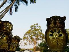 Owls (T.M. Fotografia) Tags: brazil brasil owl coruja wisdom chacara owls corujas estátuas sabedoria misticismo corujona