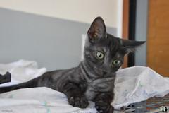 Candy's Baby (.Vale.) Tags: cats baby animals cat kitten feline kitty kittens gatto gatti rifugio micio micia gattino gatta catshelter gattini micini