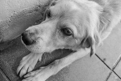 Is there a fly? (Regiane Fernandes) Tags: pets white black dogs animals nikon sp d3100