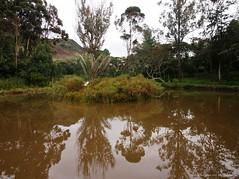 El Lago. (Ivan Mauricio Agudelo Velasquez) Tags: park parque lake reflection tree arbol lago lough reflejo loch aljibe