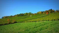 Autumn in Wuerzburg, Mainfranken (jdwoodyard) Tags: autumn fall nature beautiful germany bayern bavaria leaf vineyard franconia wurzburg würzburg wein weinberg expat wuerzburg unterfranken wue wü mainfranken weinamstein steinwien