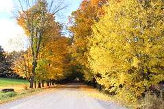 Country Road in Fall (pegase1972) Tags: qc québec quebec canada estrie autumn automne fall easterntownships road explore explored