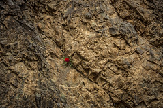 my dream (naser.shirmohamadi) Tags: flower rock naser   shirmohamadi