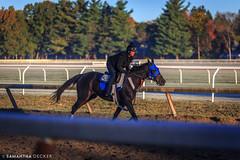 Fall Morning Ride (Samantha Decker) Tags: horse ny newyork upstate saratogasprings nyra canonef135mmf2lusm saratogaracecourse oklahomatrack canoneos6d samanthadecker