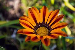 Flower (OuSsama JB) Tags: red flower yellow algeria jijel