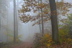 4 - Quand l'automne en fort revient (Excalibur67) Tags: autumn trees fog forest automne nikon contemporary sigma arbres brouillard d7100 vosgesdunord forts 1770f284dcoshsmc
