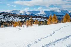 DSC_0823 (kalitushka) Tags: november nature beautiful landscape freedom nikon day altay altaymountains altayrepublic d7000 ulagan nikond7000 ulaganlakes