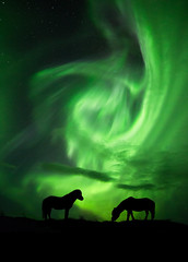 """Lost in the nightlights"" (ArnarKristjans_photography) Tags: sky horses green nature beautiful beauty animals silhouette night canon photography lights iceland amazing couple europe nightscape photographers auroraborealis naturally fantasticnature"