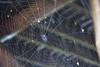 Silk Pattern (Kindallas) Tags: spider silk drop spidersilk spiderssilk