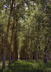 In the forest (jersey_citizen) Tags: chaumontsurloire france trees grove