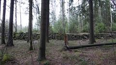 muuri (neppanen) Tags: sampen discounterintelligence helsinginkilometritehdas helsinki suomi finland päivä95 reitti95 päiväno95 reittino95 muuri kivimuuri keskuspuisto