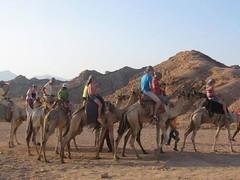رحلات اليوم الواحد في شرم الشيخ مع رحلات الجمال في الصحراء (Cairo Day Tours) Tags: رحلات اليوم الواحد في شرم الشيخ ركوب الجمال الصحراء