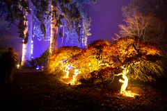 Enchanted Christmas 2016 at Westonbirt (smir_001 (on/off)) Tags: westonbirt trees colour winter december plants forest park light night enchanted illumination red orange mystery colourful enchantedwood2016 magical magicallight canoneos7d nature outdoors uk westonbirtarboretum arboretum forestrycommission britishparks parks england southgloucestershire