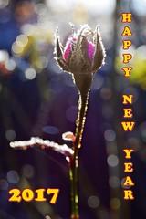 Happy New Year 2017! (Shootmania) Tags: happynewyear 2017 neujahrswünsche rose outdoor bokeh nikon blüte eis winter love newyearsday gegenlicht