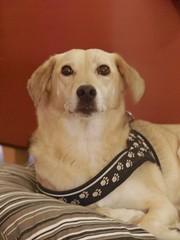 good doggy (Riex) Tags: dog chien animal pet portrait a100 minoltaamount amount sal1680z carlzeisssonyf35451680mm variosonnartdt35451680
