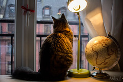 First Snow (Happy Adi) Tags: cat window fenetre winter hiver snow neige strasbourg alsace france 67 canon 60d camera reflex map terrestre globe monde discovery adelinev adelinevphotographies chat mallow animal sweet peaceful light office bureau lumière view vue