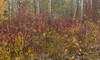 Cerknica Lake (happy.apple) Tags: dolenjejezero cerknica slovenia si cerkniškojezero cerknicalake slovenija autumn jesen fall trees