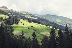 Zillertal Alps (F_L_O_W_B_O) Tags: alps tree trees bäume alpen zillertal mountains gras green sonya7ii 2016