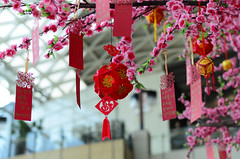 2017 Chinese New Year (iris0327) Tags: beijing blessing china chinesenewyear oriental traditional wish wishtree