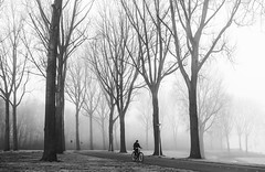 Amsterdamse Bos (Rolling Spoke) Tags: bike bicycle bici bicicleta ciclismo fiets velo street mono monoart monochrome minimalism minimal blackandwhite bnw fog mist weather park trees amsterdamse bos amsterdam