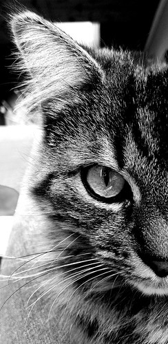 Very bad cat !