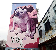 Tilly Dog - Mural by Kevin Ledo (Exile on Ontario St) Tags: tilly dog kevinledo almar appliance kevin ledo artist street art urbain urban graffiti murale mural murals murales muraliste artiste montreal ndg décarie frenchbulldog chien french bulldog bouledogue français montréal decarie notredamedegrâce bouledoguefrançais almarappliance building old notre dame de grâce grace notredamedegrace streetart giant dogs chiens pet pets animal magenta