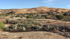 Desert crust and petrified dunes (Jeff Mitton) Tags: desertcrust biocrust fossilizeddunes pinyonjuniperwoodland earthnaturelife wondersofnature