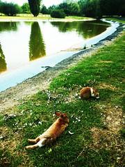 (sHaDiNa) Tags: lago coniglio alberi bunny rabbit tree acqua water lake riflesso reflection erba grass verde green paesaggio landscape prato parco park forlì italia italy parcourbano