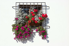 Window (mhawkins) Tags: window kazimierzdolny flower poland