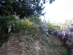 forum: wisteria and bricks